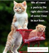 need-a-push